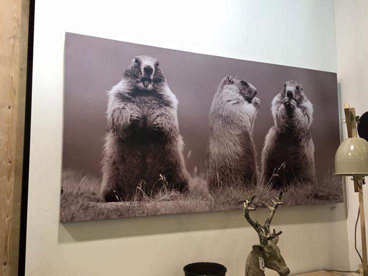 La vous ne pouvez que craquer. They are lovely, aren't they ? #marmots #picture #design #chalets www.lecoinmontagne.com