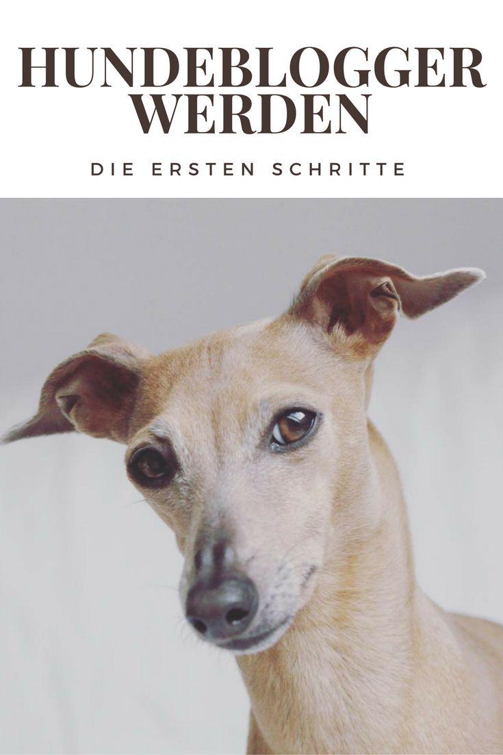Die ersten Schritte zu einem erfolgreichen Hundeblog - starte jetzt!