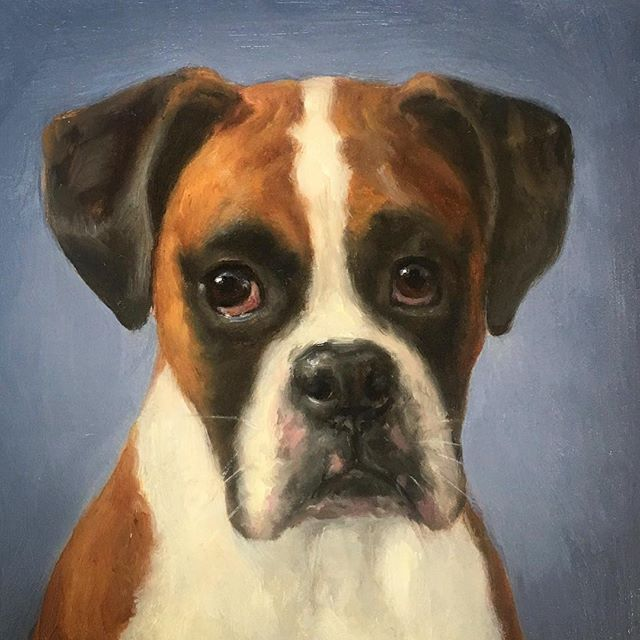 Oil on board. 6*6in. Another commission I didn't post. Lovely boxer. The reference pic was not the best, so I concentrated more on the eyes and expression.