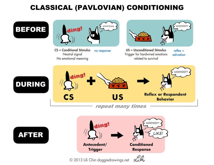 10 best Classical Conditioning (2/5) // How can I help people learn ...