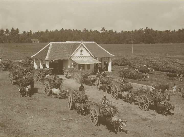 Para pekerja sedang mengangkut tebu di pabrik gula Buduran, Sidoarjo 1925 - 1930