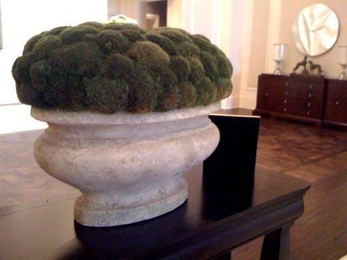 decorative moss for indoor planters - Google Search