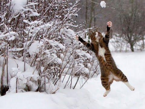 Как животные радуются снегу.