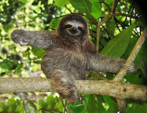 Sloth Photo Digital Delivery Delivery Digital Photo Sloth Mammals Sloth Photos Rare Animals