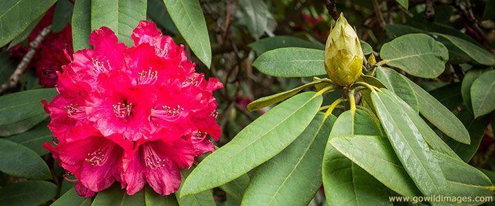 Parks Victoria - National Rhododendron Garden
