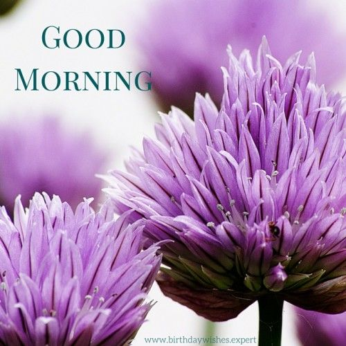 Good Morning Sunday Flowers Images : Best images about blessings and greetings for you on