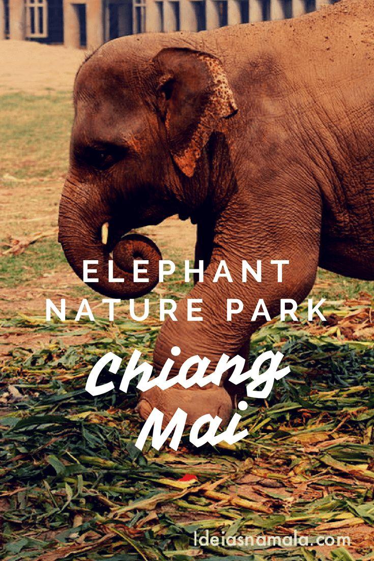 Depois de pesquisar muito optei pelo Elephant Nature Park, um santuário que cuida de cerca de 45 elefantes, a maioria deles resgatado de alguma situação de risco ou tratamento abusivo. Lá não há shows e nem passeios de elefantes mas sobra amor e cuidados. Uma das experiências mais fantásticas da minha vida e algo imperdível para quem vai pra Chiang Mai!
