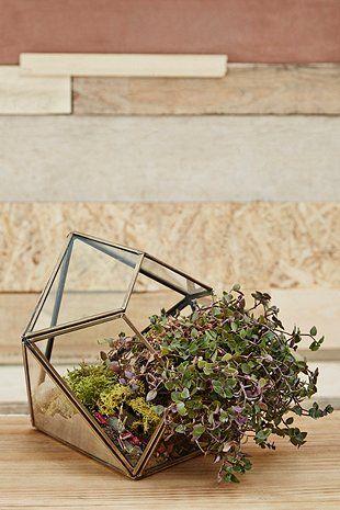 Urban Grow Gold Diamond Terrarium Planter