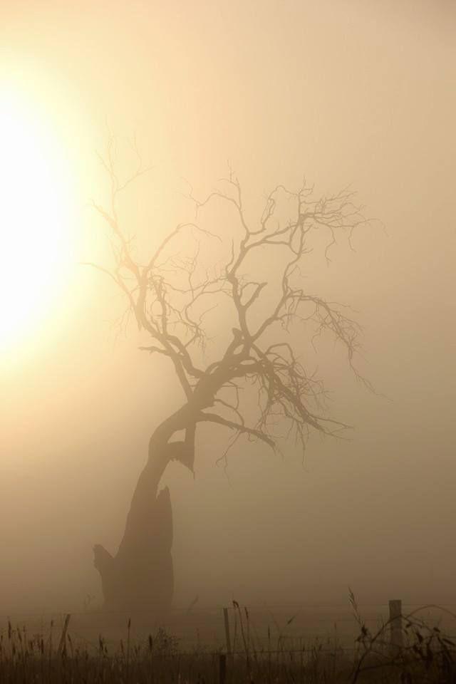Creepy Hollow Sunrise 4th May 2015