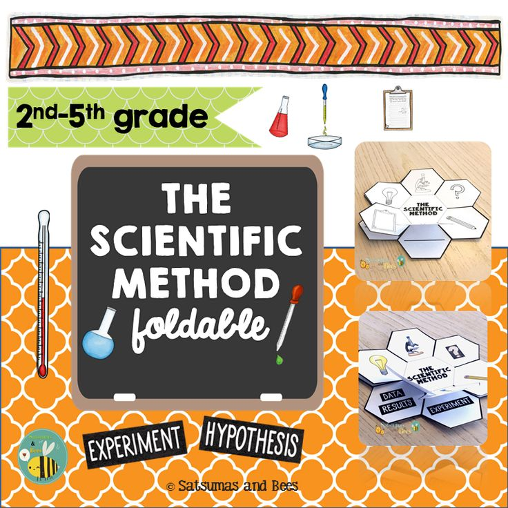 The 25+ best Scientific method foldable ideas on Pinterest - scientific method worksheet