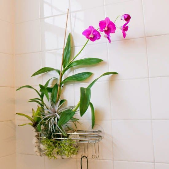 bit of romance to your boring shower? All you need is a hanging shower caddy, a plastic loofah, orchid bark and a few other epiphytic 'air' plants to turn a well-lit bathroom into a tropical spa getaway. Here's how to make your own! #hangingorchids