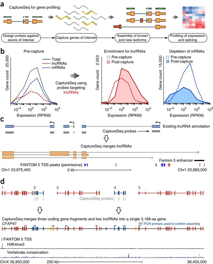 """Study Points to Utility of Targeted RNA Sequencing for Low-abundance Transcripts - from GenomeWeb  NEW YORK (GenomeWeb) – A team led by researchers from Australia's Garvan Institute of Medical Research this week reported new data demonstrating the superiority of a targeted RNA sequencing method called """"capture sequencing"""" (CaptureSeq) over standard RNA sequencing and qRT-PCR for detecting and quantifying genes with low and differential expression, which they say are particularly relevant…"""