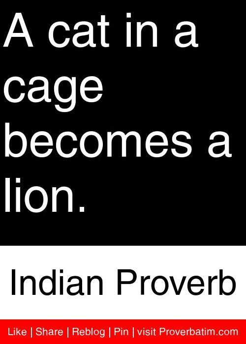 A cat in a cage becomes a lion. - Indian Proverb #proverbs #quotes