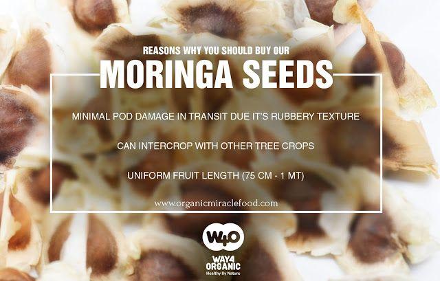 graphic design: Super-Food called Moringa!