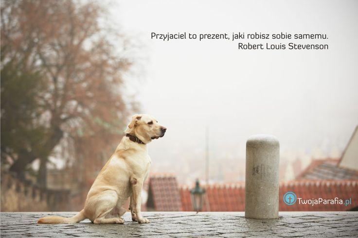 Pies jest najlepszym przyjacielem człowieka#przyjaciel #friend #dog #trust #wiara #God #Bóg #TP #TwojaParafia.pl