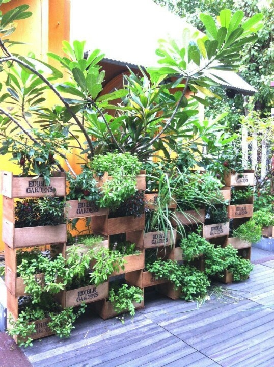 edible gardens planter wall made from wine boxes