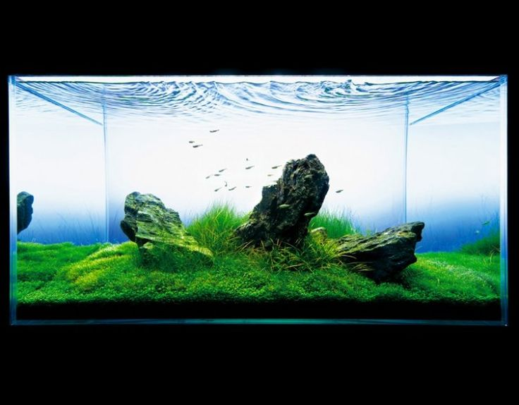 ADA Nature Aquarium Aquascape | The Green Machine | Nature ...