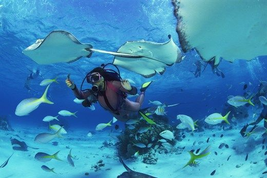 Diving with Manta Rays in Fiji - 8 things to do in Fiji #diver #diving #fish #wildlife #ocean #underwater #KILROY #travel #backpacking