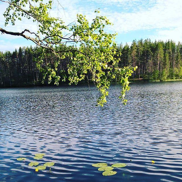 Rokua kylpee juhannuksen aatonaattona auringossa #juhannuskoivu #finnishnature #summer #lake #water #freshair #midnightsun #yötönyö #silence #rokua #rokuahealthspa #visitrokua #yleluonto #luontoonfi #ourfinland #visitfinland #cleanair #juhannus #juhannustaiat #lumme #finnismoments #outdoorfinlands
