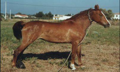 Tetano En Equinos Blog AQHA StallionMexSearch tenano en equinos tetano en caballos tetanos tratamiento de tetano en caballos vacuna antitetanica