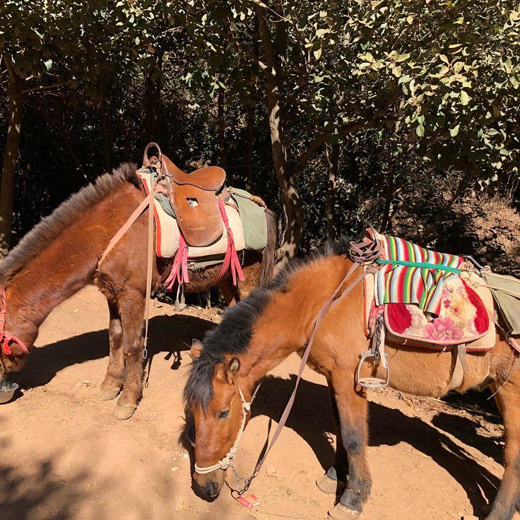 拉市海の近くで馬に乗って山登り。一時間半乗って、馬もちょっと疲れてた。納西族のガイドがずっと喋ってて、愉快。最後に歌も聞かせてくれた。 #雲南 #拉市海 #中国 #乗馬 #雲南省 #麗江 #納西族 #ナシ族
