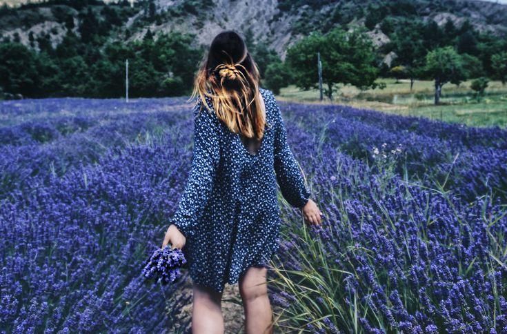 Zum Lavendelblühen in die Provence