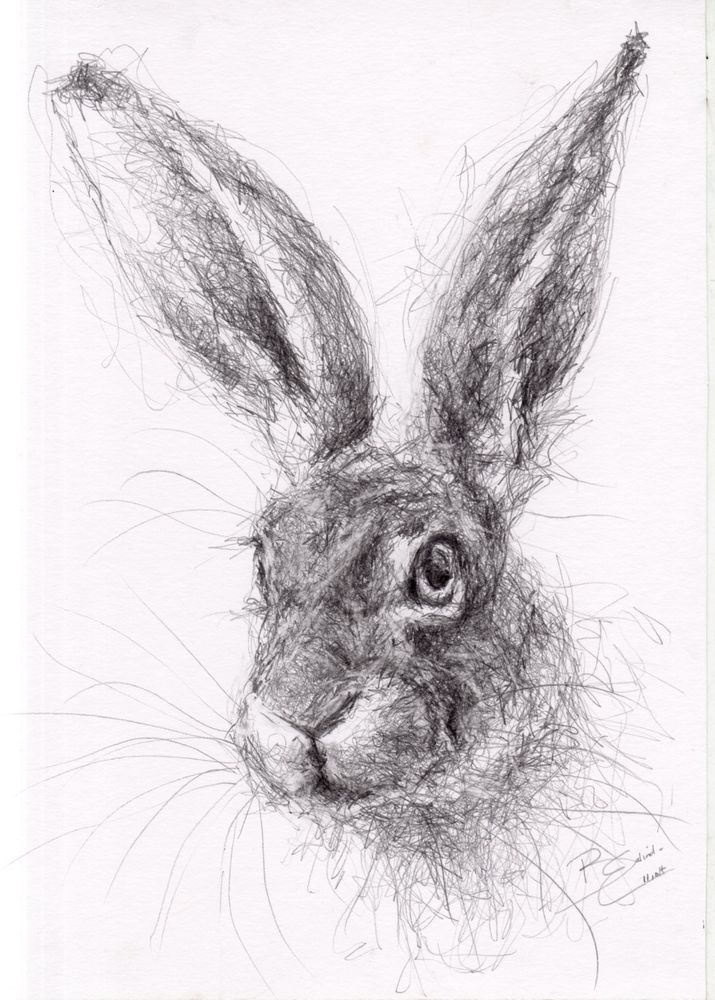 New Stock - ORIGINAL A4 Wildlife Drawing of a HARE Animal Art by Belinda Elliott   eBay