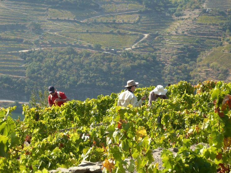 The people of the Douro need nothing more than the Douro to live and to be happy.