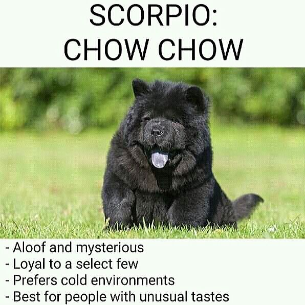 Scorpio Be Like As Dog Meme Scope Black Panther Cat Panther Cat Scorpio Season