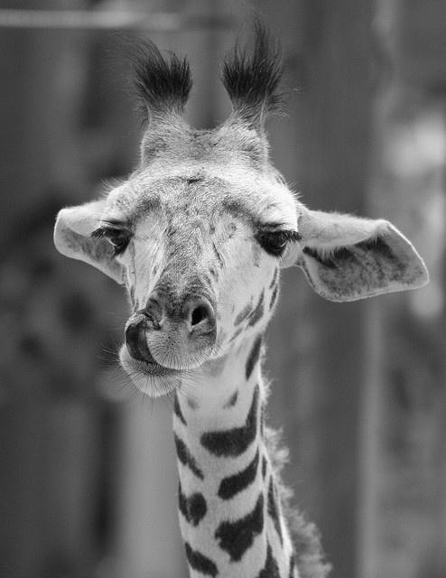 Houston Zoo [Baby Amali] By slight clutter