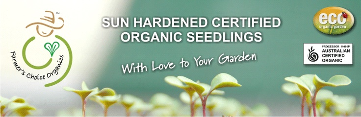organic seelings Murwillumbah We still specialise in providing the best traditional varieties of seasonal vegetable seedlings, all grown under the strictest Certified Organic processes and procedures. We create our high quality, sun hardened seedlings using a uniquely formulated hand blended soil, created using the best available Biodynamic and Certified Organic ingredients.