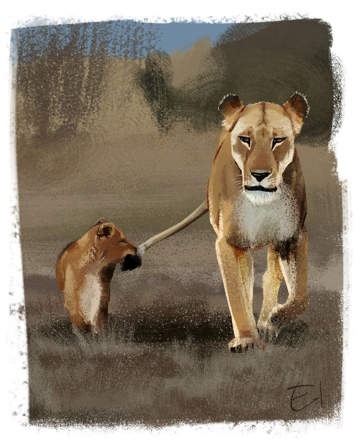 Lions sketch