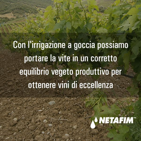 """Sei un #winelovers? Segui tutti i vantaggi dell'irrigazione a goccia sul nostro Blog nella categoria """"Vite e vino"""" http://blog.netafim.it/category/vite-e-vino/"""