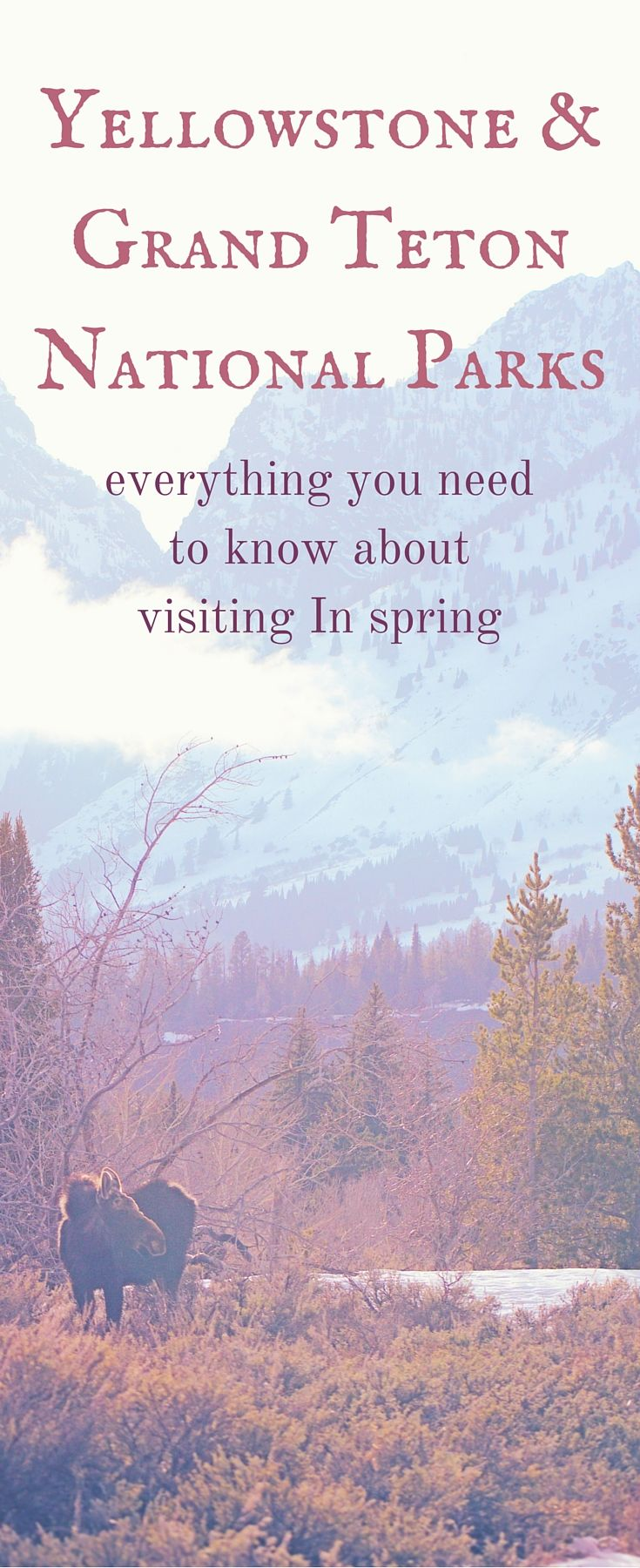 What You Need to Know About Visiting Yellowstone & Grand Teton National Parks in Spring | In this post I am going to give you advice for visiting The Grand Tetons and Yellowstone in the spring, a general overview of the seasonal calendar along with  a Top 10 List of my best learned travel tips through my own mistakes and misfortune for first timers visiting these majestic National Parks. Oh, and I'll throw in some pretty pictures, just in case you really don't care about any of the details.