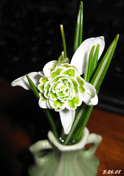 Snowdrop - January birth flower into a tat for Alecs birth month