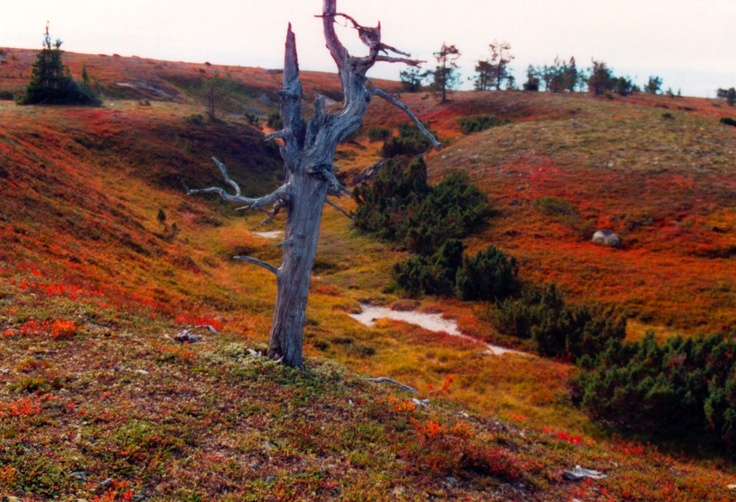 'Ruska' - Autumn colors in Lapland, Finland.