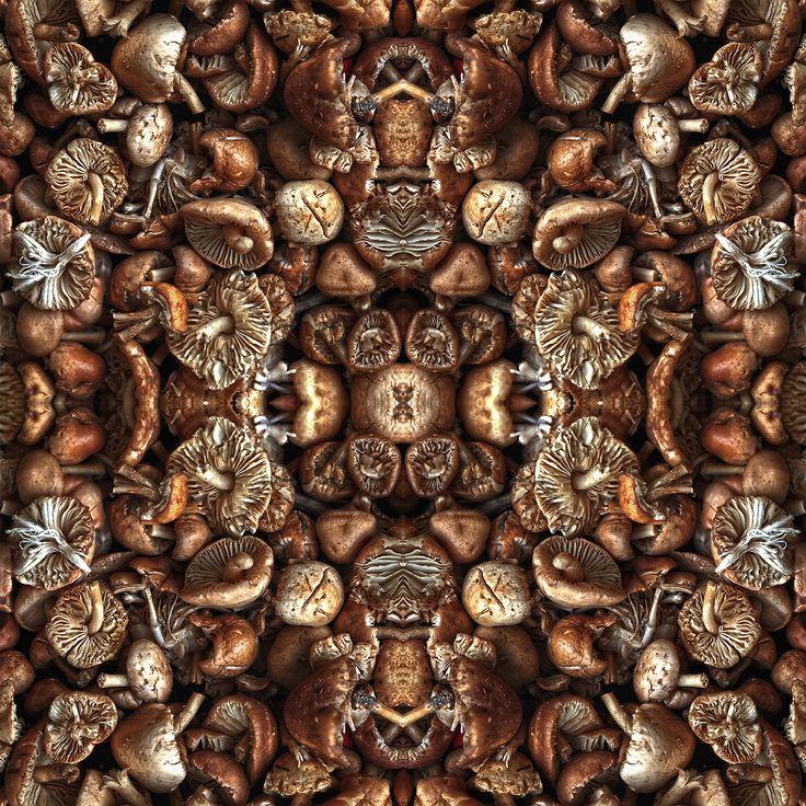 #Waldpilze #Wildpilze #Nelken-Schwindling #Symmetrie #Wiederholung #Muster