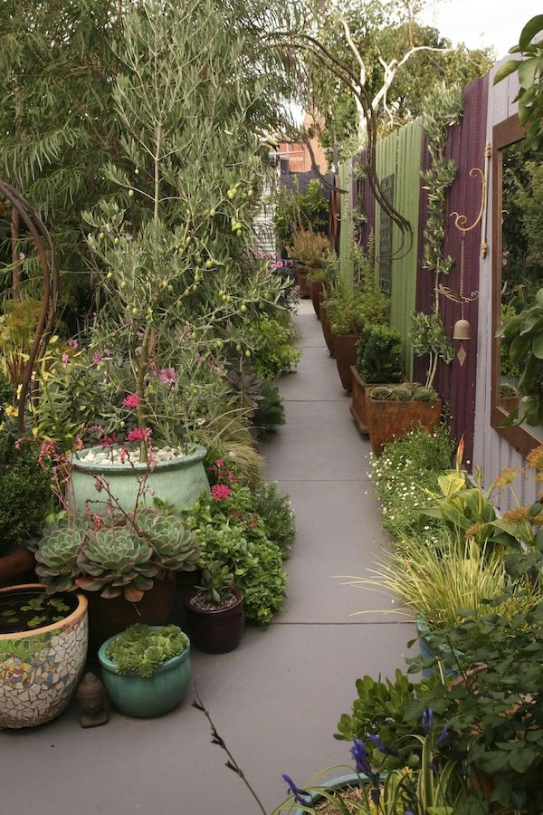 Jenni Woodruff's exquisite garden   GardenDrum A simple painted concrete path  pots revived by a rusted finish or mosaics combine with a range of succulents  grasses  a large olive