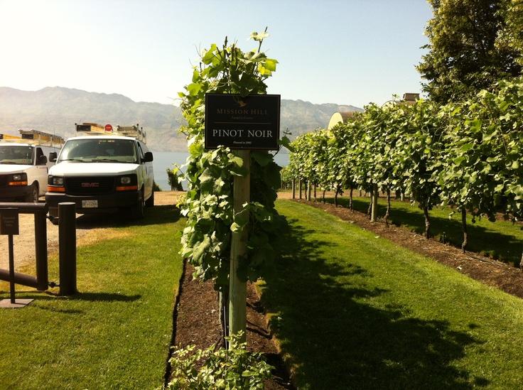Mission Hill vineyard kelowna bc