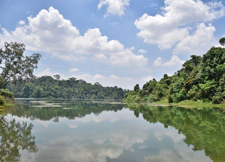 MacRitchie Reservoirs, Singapore