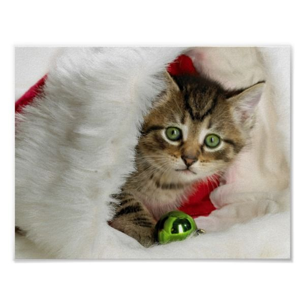 Christmas Cat Kitten Cat Cute Cats Poster Zazzle Com