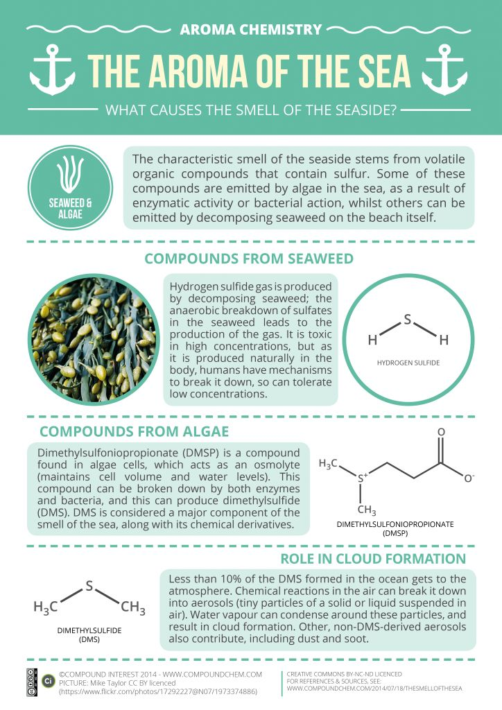 Aroma chemistry: the aroma of the sea
