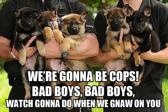 We're gonna be cops!
