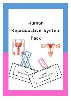 This pack includes - Labelled diagrams of the male and female reproductive systems that can be laminated for student observation.- Grey scale and colour unlabelled male and female reproductive systems for students.- Pockets for function notes.  Student can cut out the structure and its function and file it in its pocket for later reference.- Matching cards for structures and their functionsAlso available Human body systems flip chartDigestive system flap book