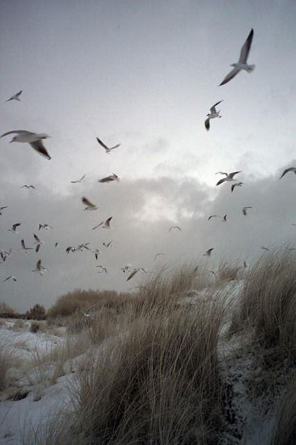 The movement of the birds along with the beach and vegetation.