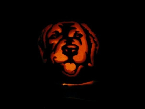 Golden retriever pumpkin carving top holiday