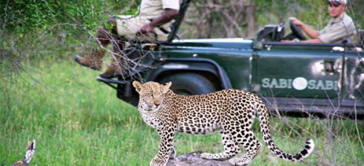 See the wild life up close in the wild, With expert game rangers
