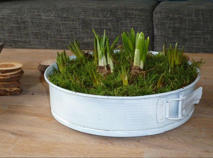 Oude springvorm omgedoopt tot plantenbak! Even een kleurtje spuiten en de bolletjes kunnen erin! Leuk voor binnen en buiten!