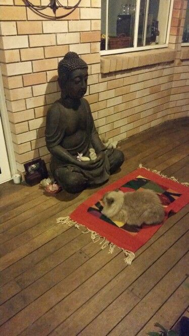 My Bella was sitting with Buddha for hours.