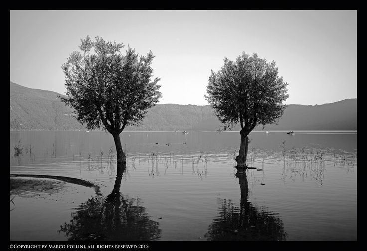 https://flic.kr/p/ALNiR3 | Trees | Leica M-P , Summarit 35mm f/2.4 ©Copyright by Marco Pollini, all rights reserved 2015